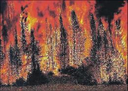 Persi 500 mila ettari di bosco