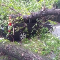 Strage di alberi nelle strade, più di cento interventi