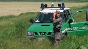 Abolizione corpo forestale, al via una petizione per fermarla