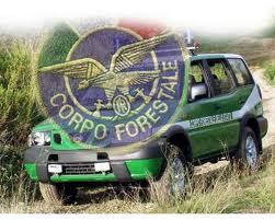 Addio alla Forestale via alla riforma le forze dell'ordine diventano quattro