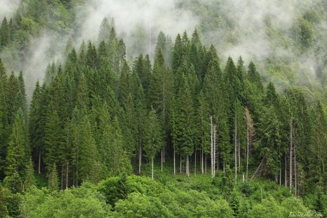 Grazie alle foreste l'Italia risparmia quasi 500 milioni di euro