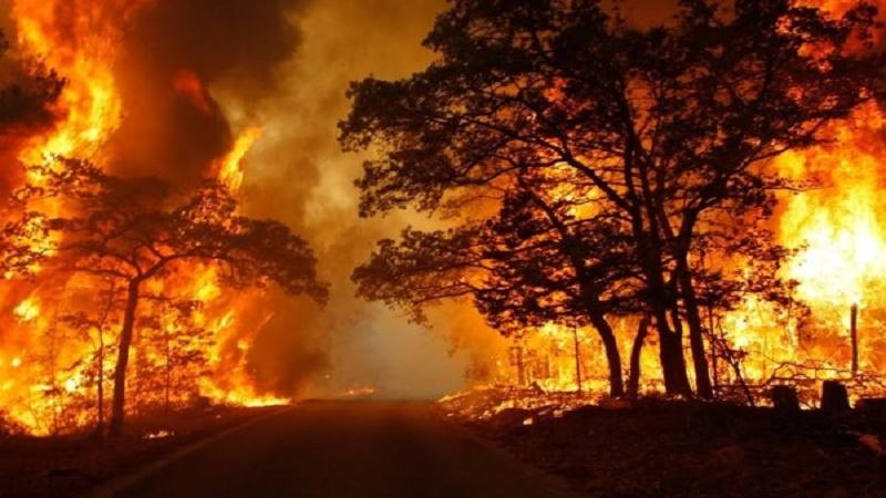 """I geologi: """"Dopo l'allarme siccità, dobbiamo fare i conti con l'emergenza incendi. Serve un intervento dello Stato per salvaguardare i territori coinvolti dai roghi"""""""