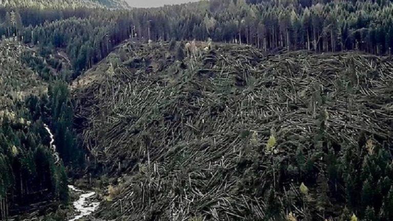 """I geologi: """"Primavera ad alto rischio. Con i boschi nudi la neve scivolerà"""""""