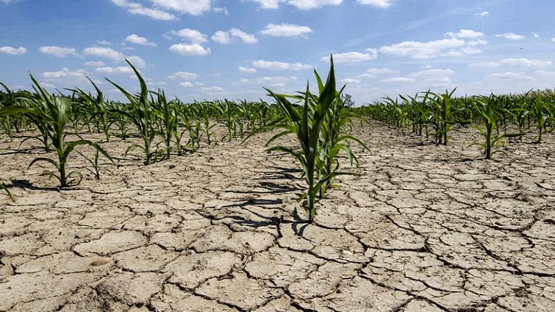 Allarme siccità al Nord, i geologi: in fasi di abbondanza preparare riserve per periodi siccitosi
