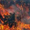 Incendi in Sardegna, geologi: ambiente e territorio una ineludibile priorità nell'agenda politica italiana