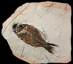 Geologia. I giacimenti fossiliferi più importanti al mondo sono in Italia