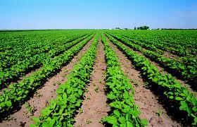 Agricoltura importanti dichiarazioni del Presidente Nazionale dei Geologi