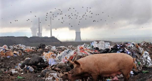 Delitti contro l'ambiente, il disegno di legge all'esame dell'Aula del Senato