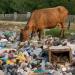 Rifiuti: in Italia censite 188 discariche abusive. La mappa Ue dei siti inquinati