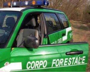 Il paradosso di abolire i forestali