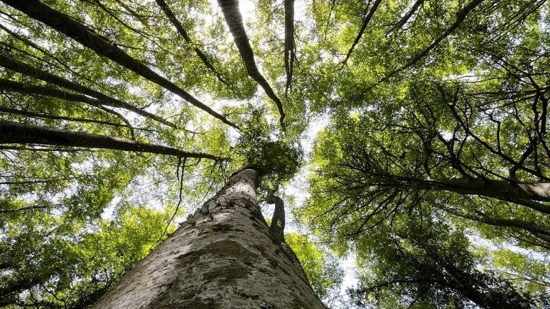 Testo unico forestale: «Perché è importante e urgente la sua approvazione»