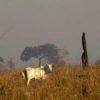 Amazzonia in fiamme: così allevamenti intensivi, soia e sfruttamento minerario devastano la foresta più grande del mondo