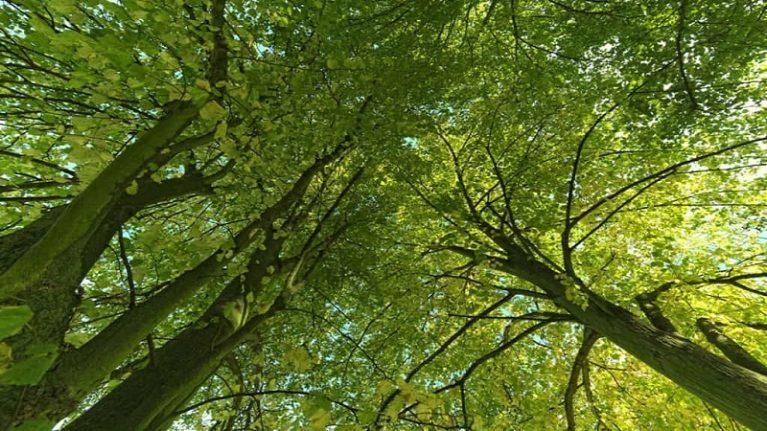 In Italia le foreste aumentano l'emergenza verde è nelle città